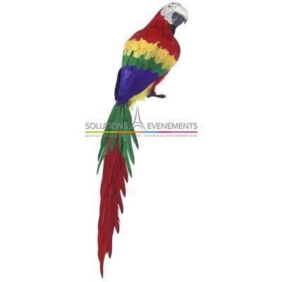 Grand perroquet