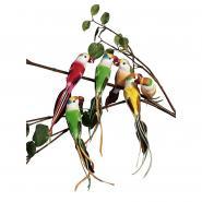 Kit petits perroquets